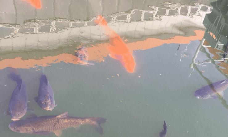 競艇ボートレース競艇場競艇選手稼ぐ初心者ボートレーサー魚食べられる-